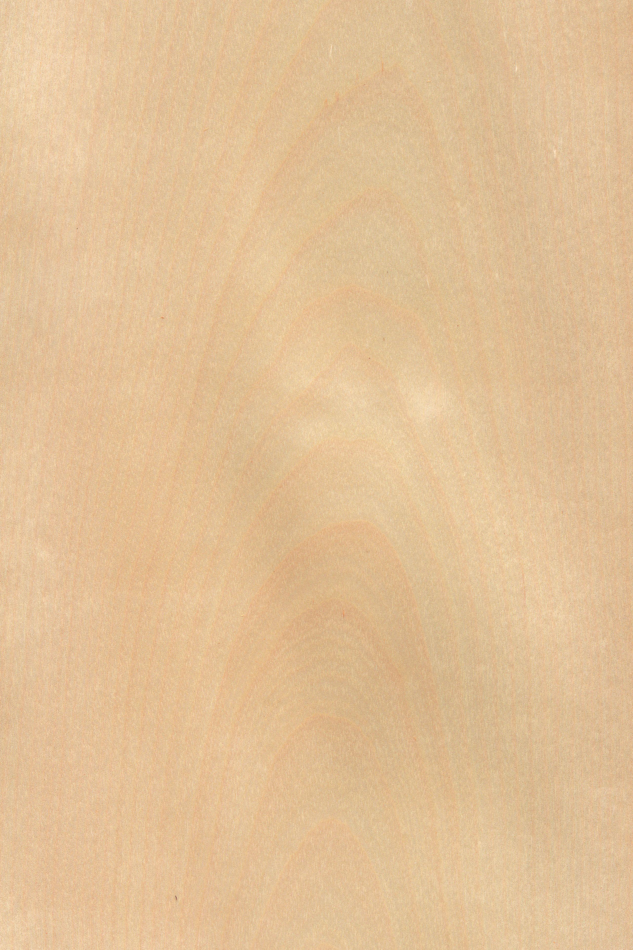 Birke | Furnier: Holzart, Birke, Blatt, Hell, Rosa, Laubholz #Holzarten  #Furniere #Holz
