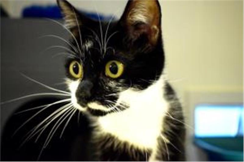 Ursula Ready For Adoption With Images Cat Adoption Adoption Cats