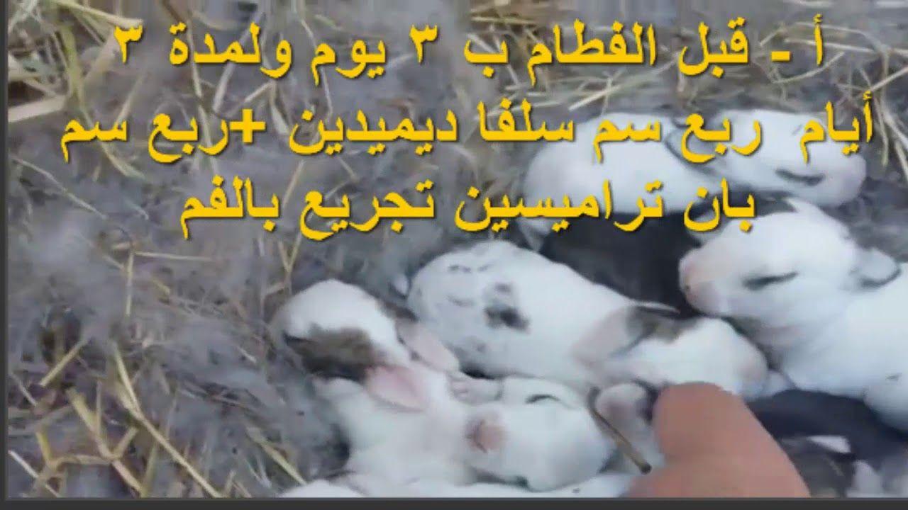 جدول العلاج والتحصينات للأرانب Rabbits And Medicines Attributes