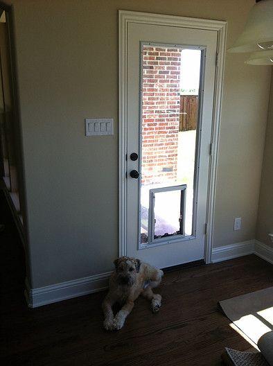 Door Glass 4 Pets In The Glass Pet Door Gallery Pet Door