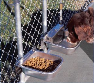 Automatic Dog Waterer And Feeder Will Be Wall Mounted