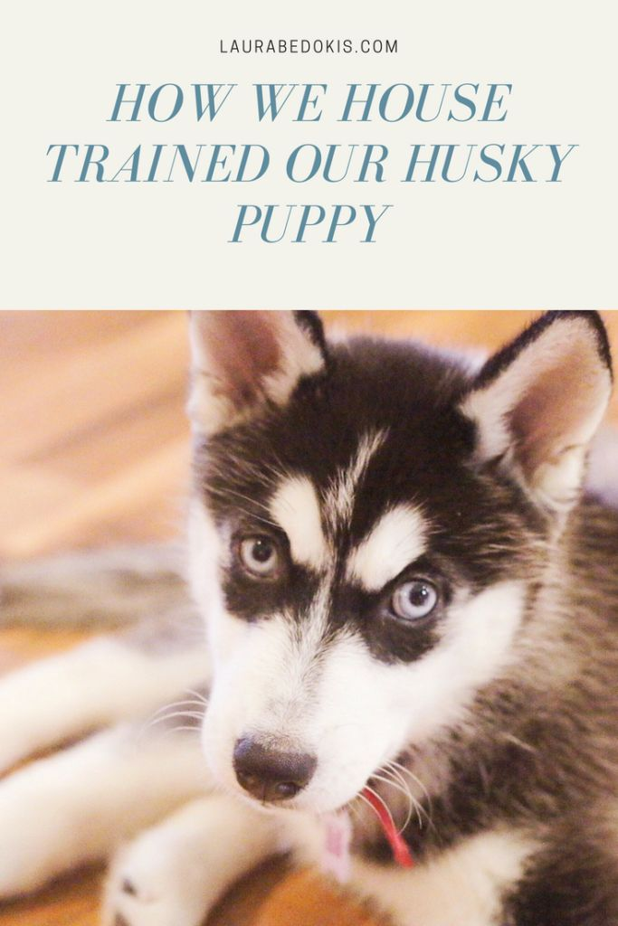 House Training Tips For Your New Puppy Puppy Training Tips