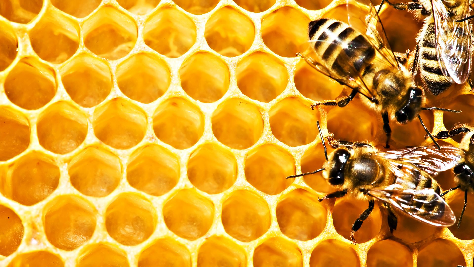 Honey Bees in HD HD Wallpapers Bee, Home made soap