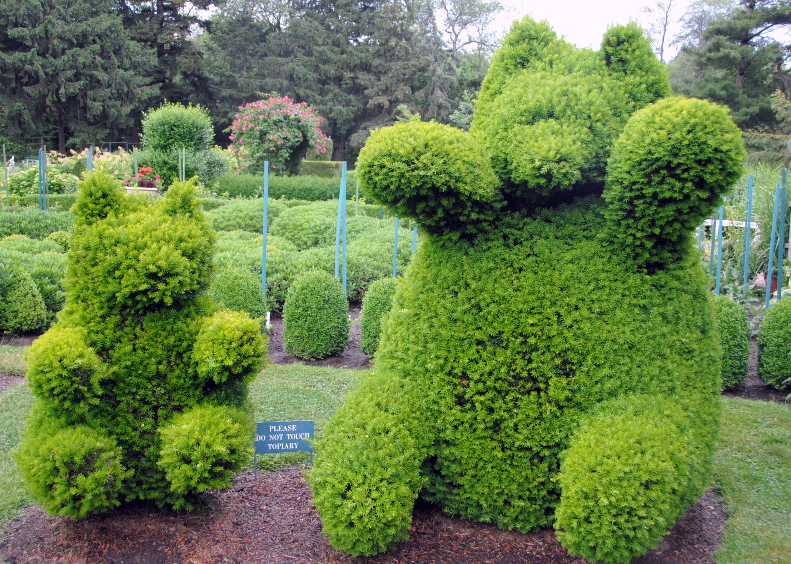 Animal Shaped Hedges Google Search Hedge The Edge Topiaries And Hedges Pinterest