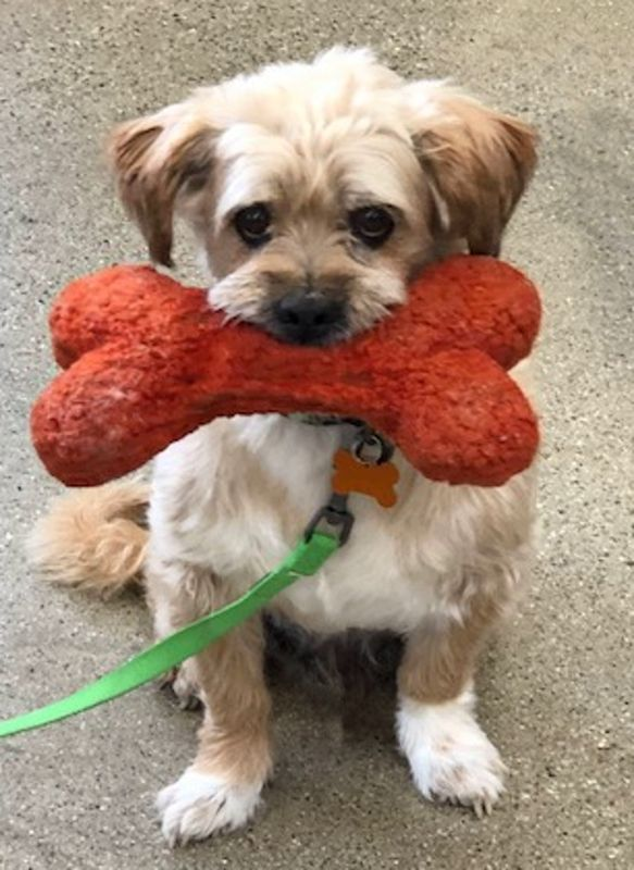 Adopt Pumba on Dogs, Pet adoption, Maltese shih tzu