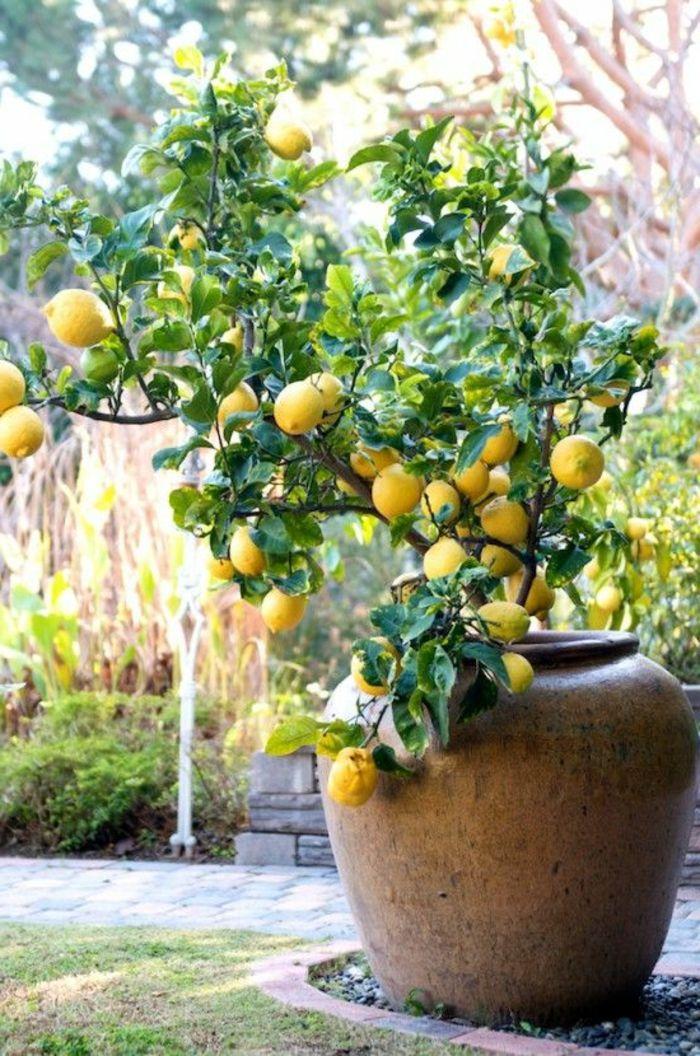 maceteros grandes, decoración de jardín con maceta grande de barro