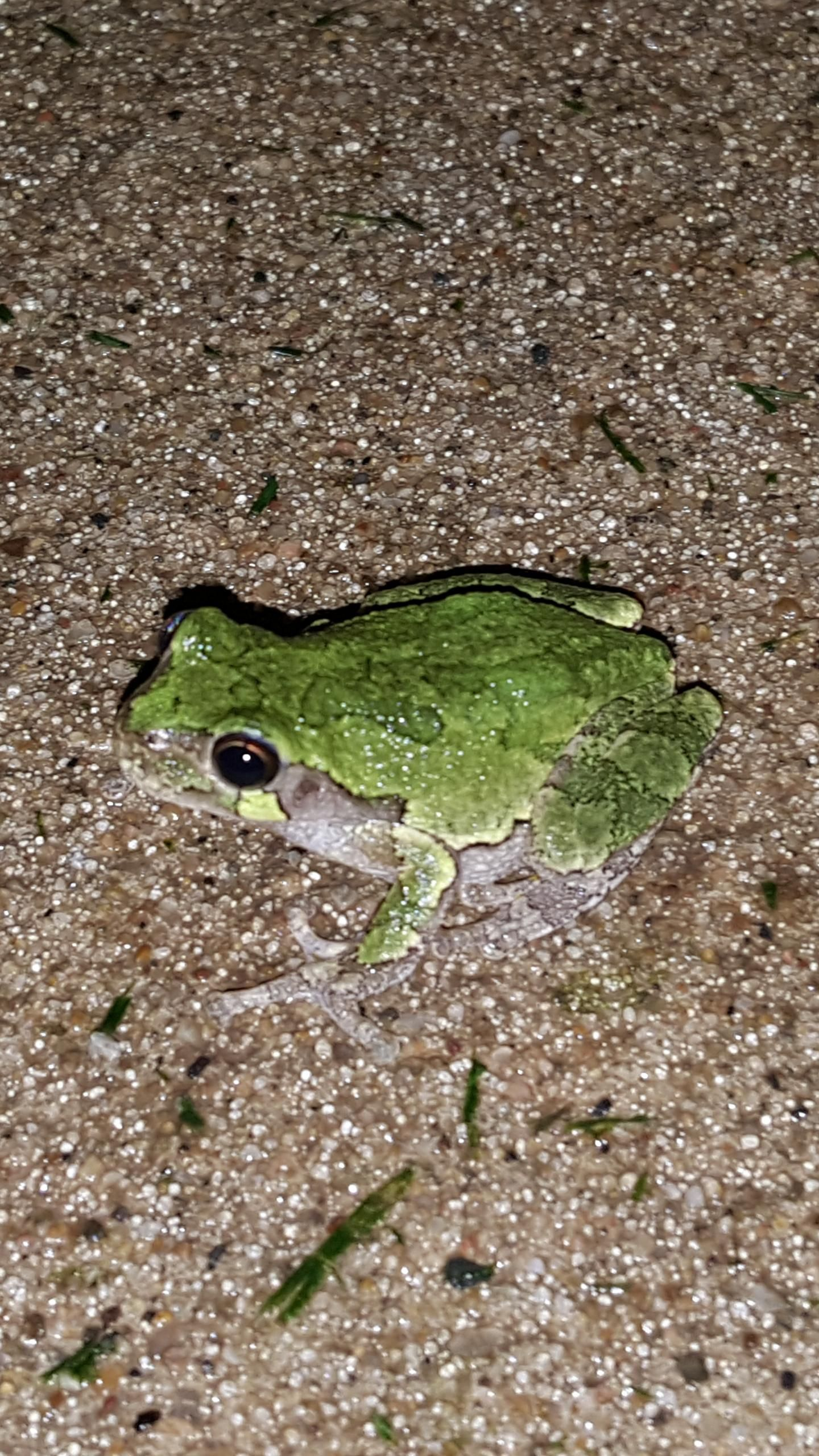 I've never seen a toad that was so green! http://ift.tt/1WmbcpS