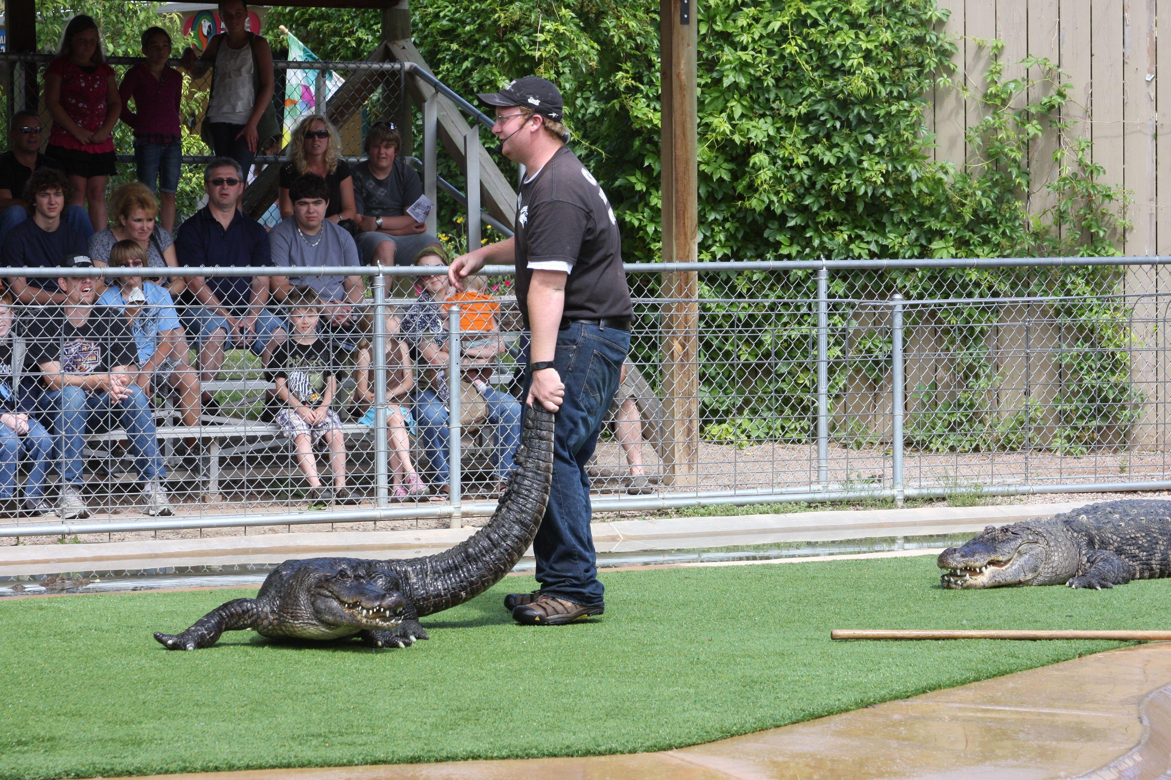 acf40f0ff9d580e2fd40a5ed34e62768 - How Long Does Reptile Gardens Take