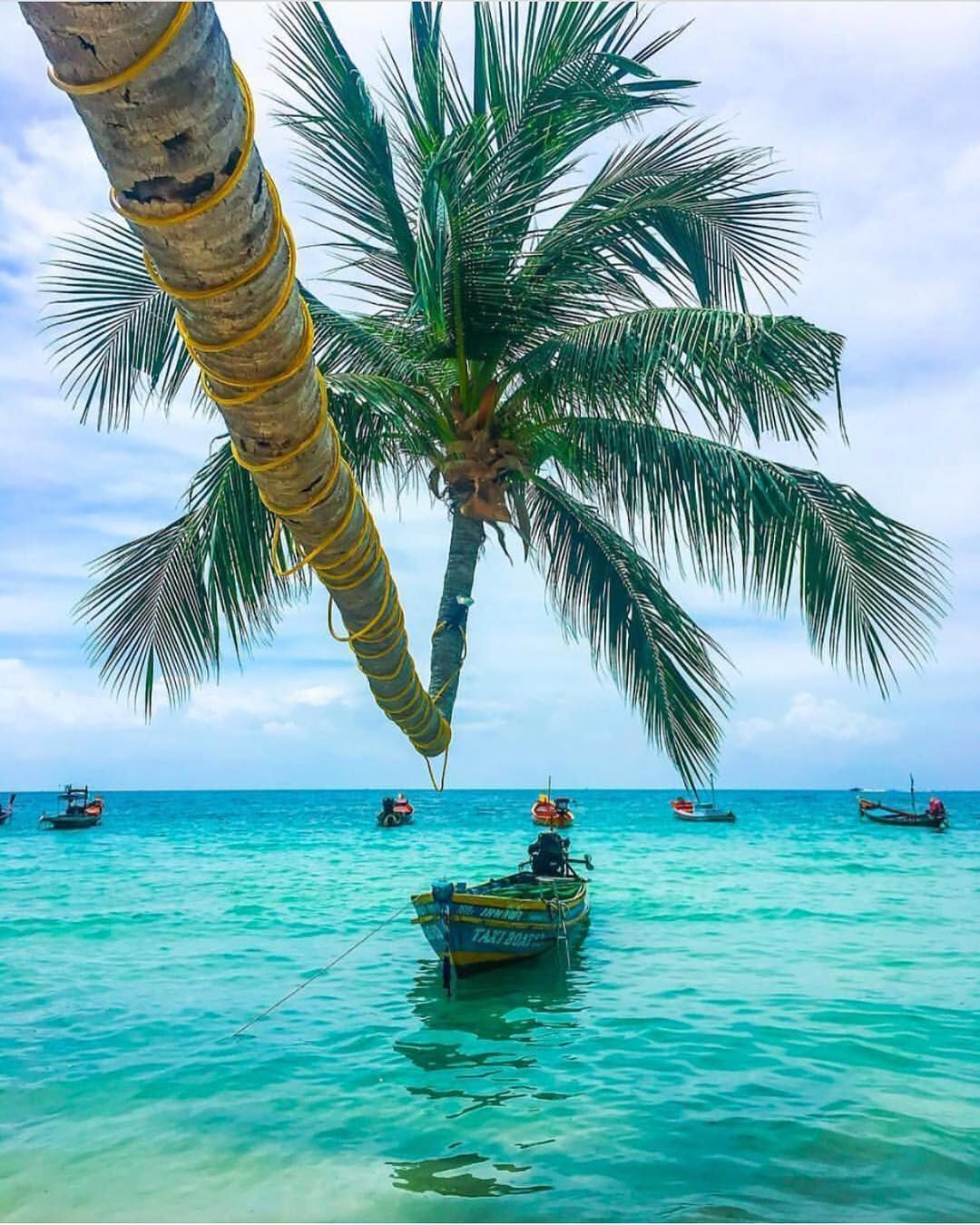 Palm trees by the sea in Thailand (📸 @the.oyster.travel)
