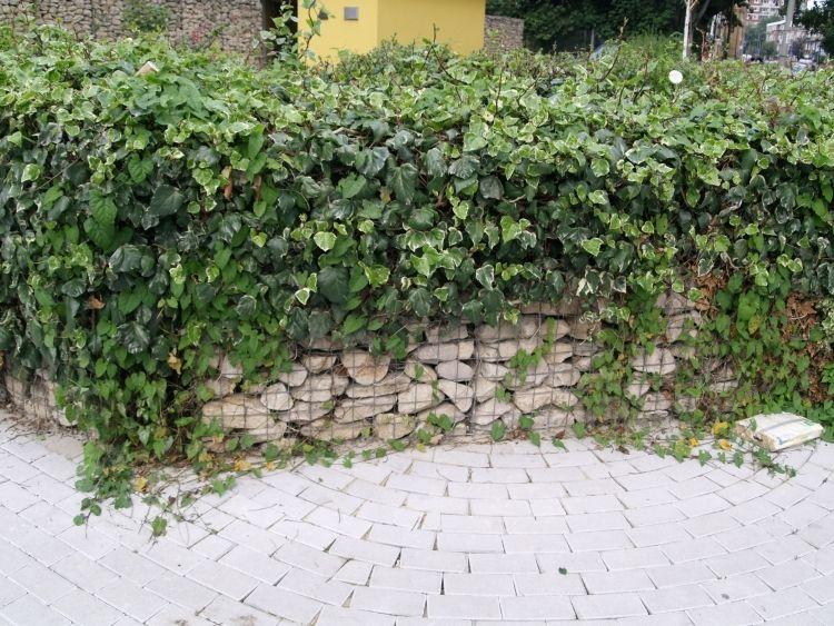 gabionenwand-gabionenzaun-moderne-gartengestaltung-begruenung ... - Moderne Vorgarten Gartengestaltung