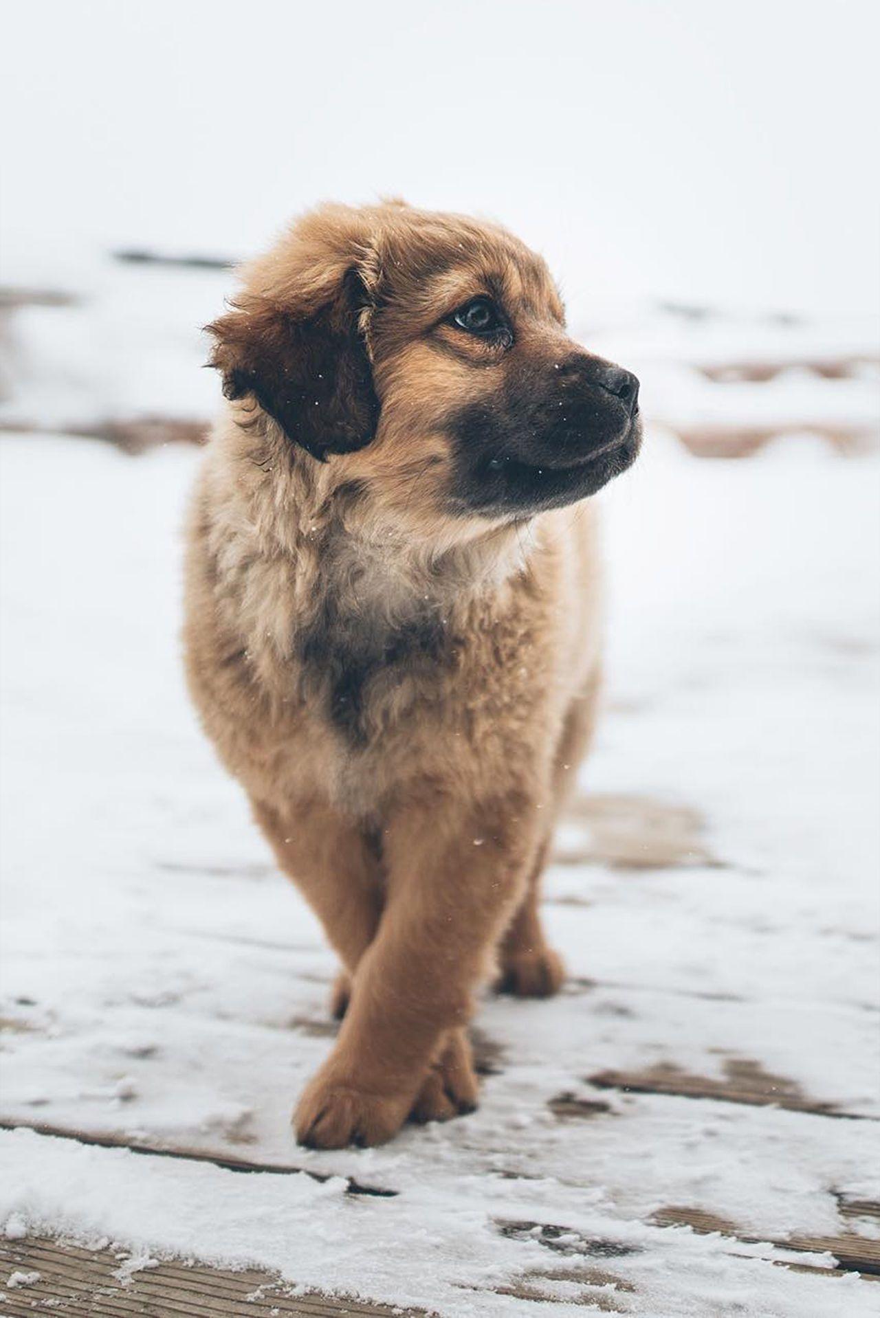 Weekly Inspiration 46 Cães bonitos, Animais filhotes e