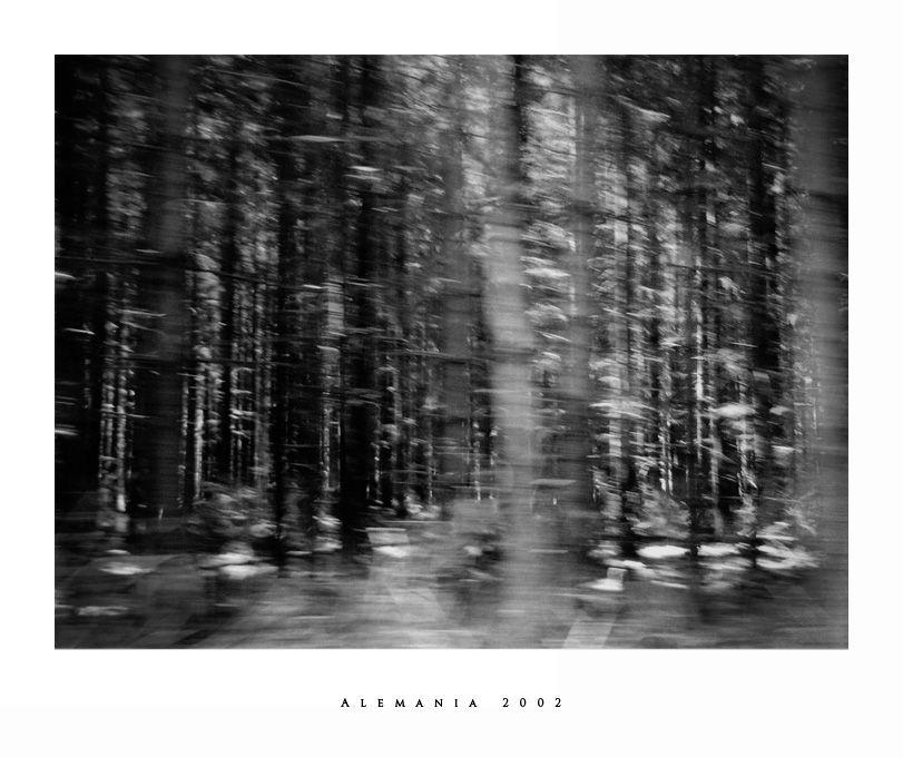 Bosque, Alemania, Walt, Forest, woods