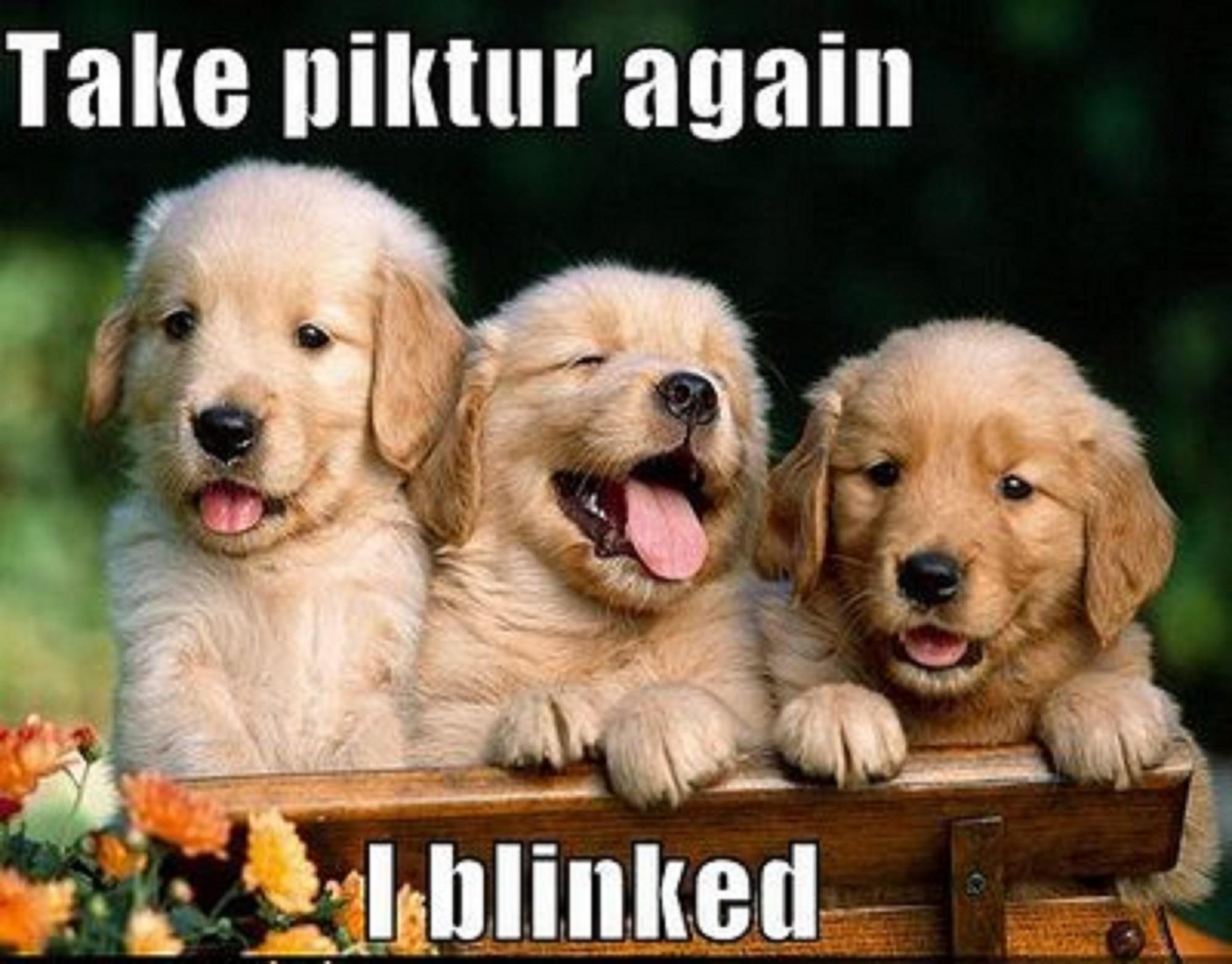 Awesome Baby Puppies Is So Cute And Beautiful laughspark