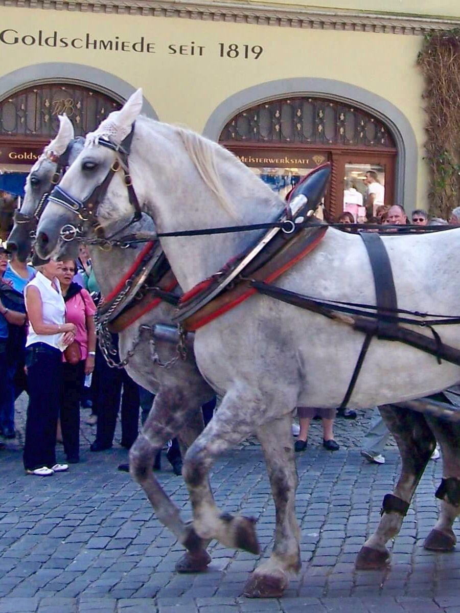 Horses in Rothenburg,Germany