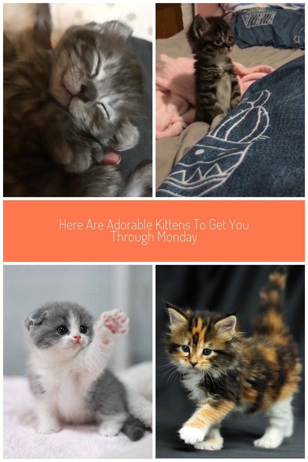 Your Cat S Age In Human Years Animals A2z In 2020 Cat Years Cat Ages Life Stages