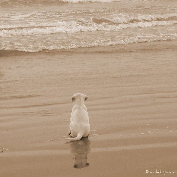 Puppy Print Contemplating The Sea Ocean Photograph Sea Print Beach