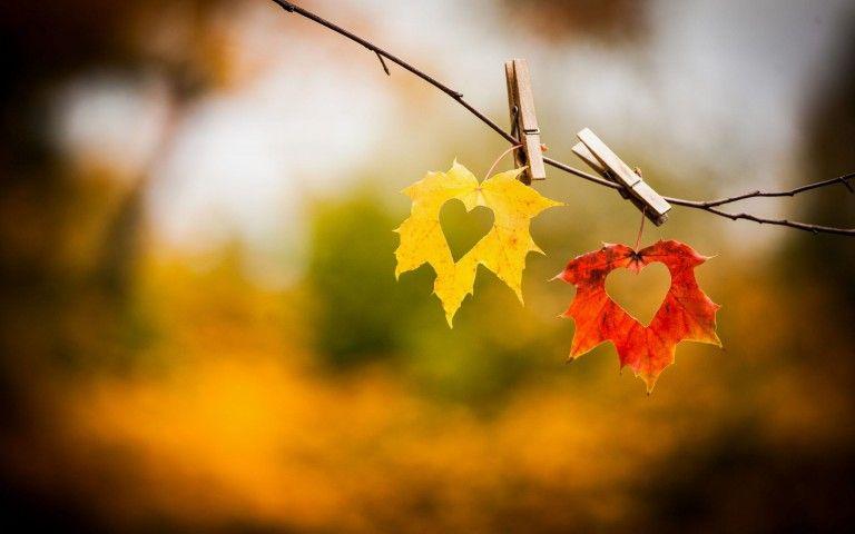 Autumn Leaves Hd Wallpapers Hdqwalls Com Autumn Leaves Wallpaper Fall Wallpaper Nature Wallpaper