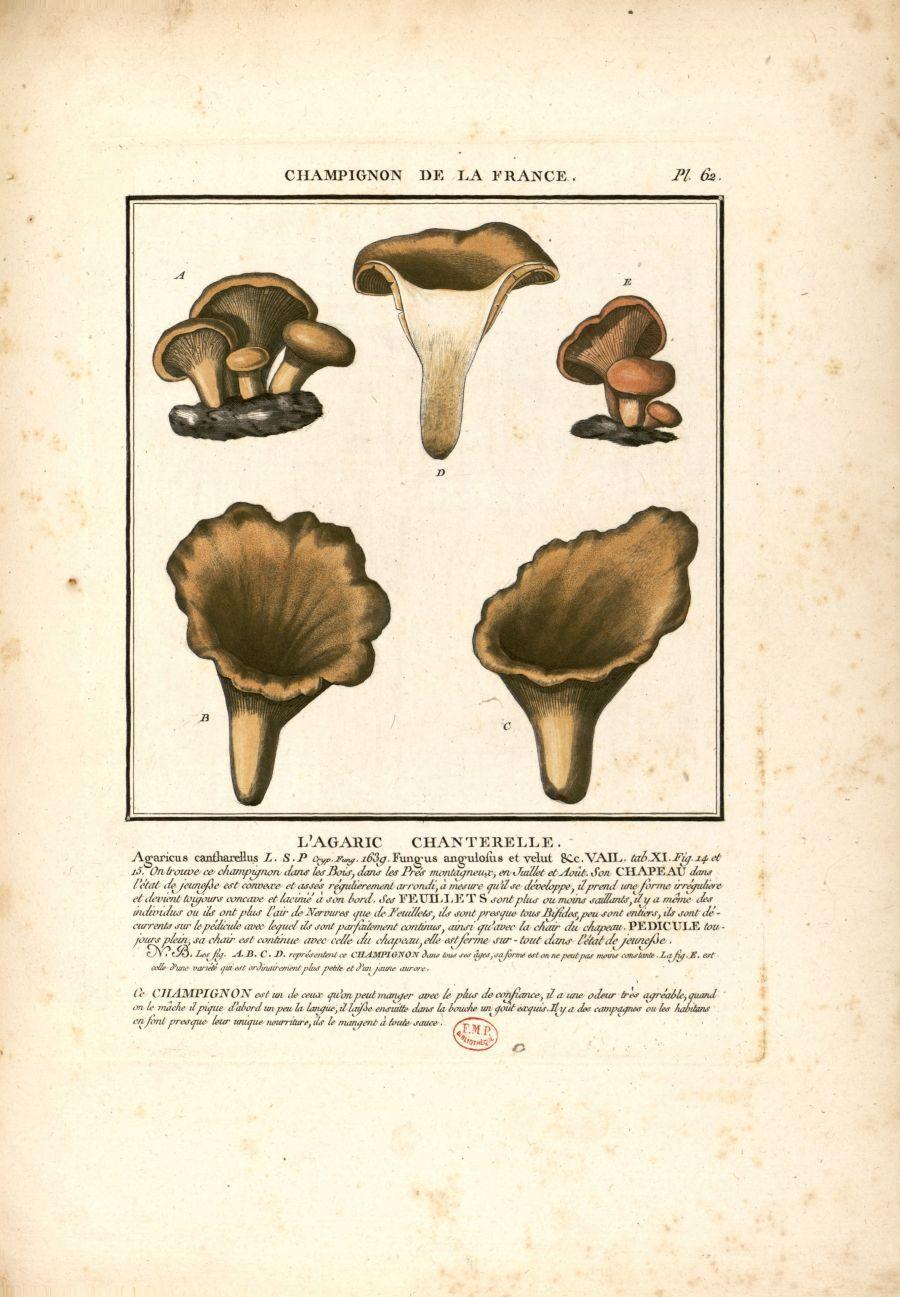 Champignon de France Chanterelle - printable image | House stuff ...