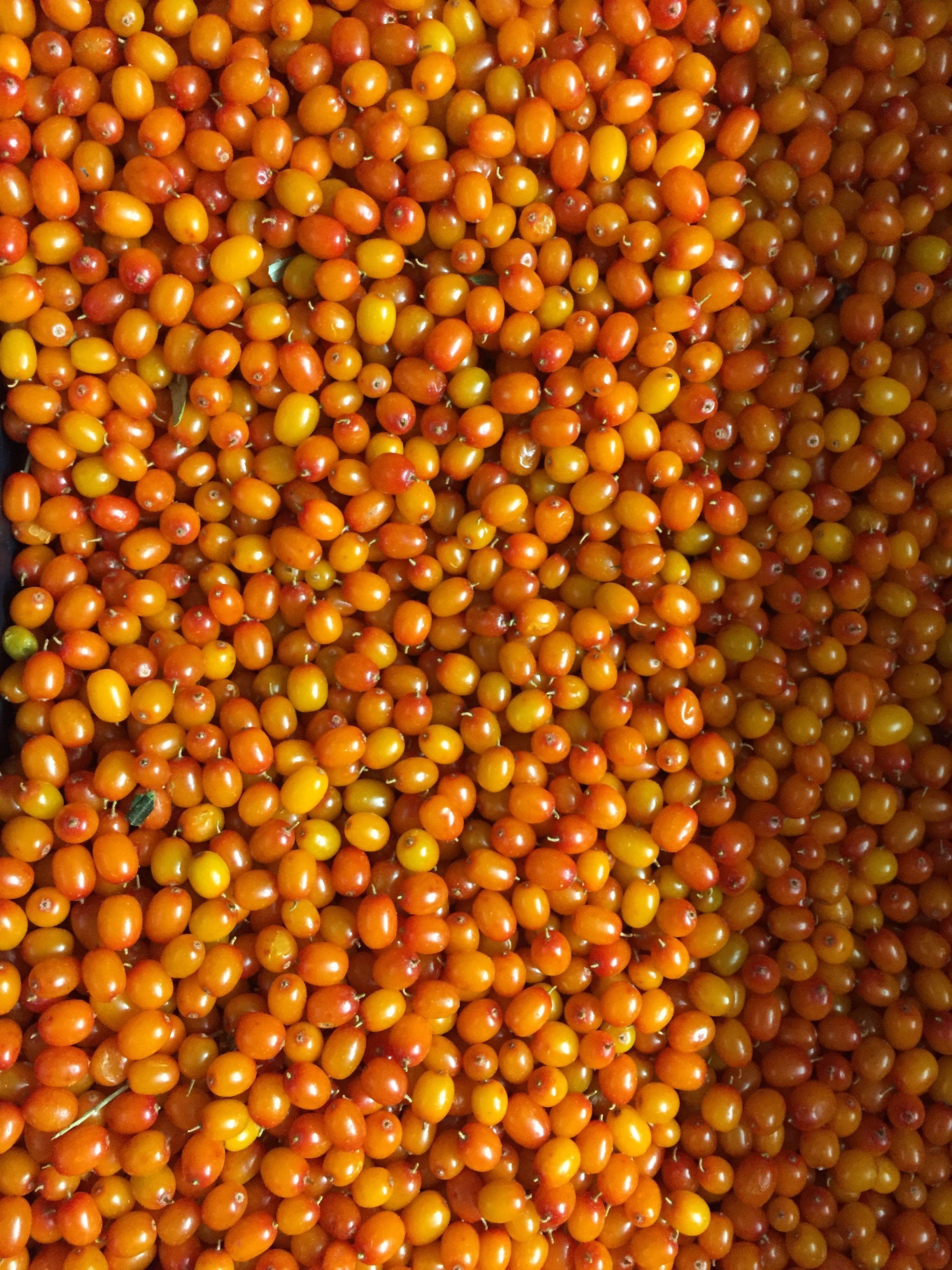 Iqf Sea Buckthorn Berries Frozen Seaberries