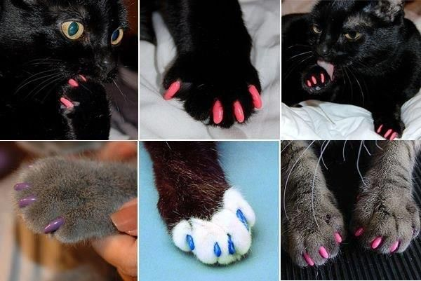 How To Get Nail Polish Out Of Cat Fur