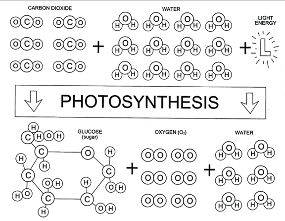 Here's a photosynthesis board game designed to help