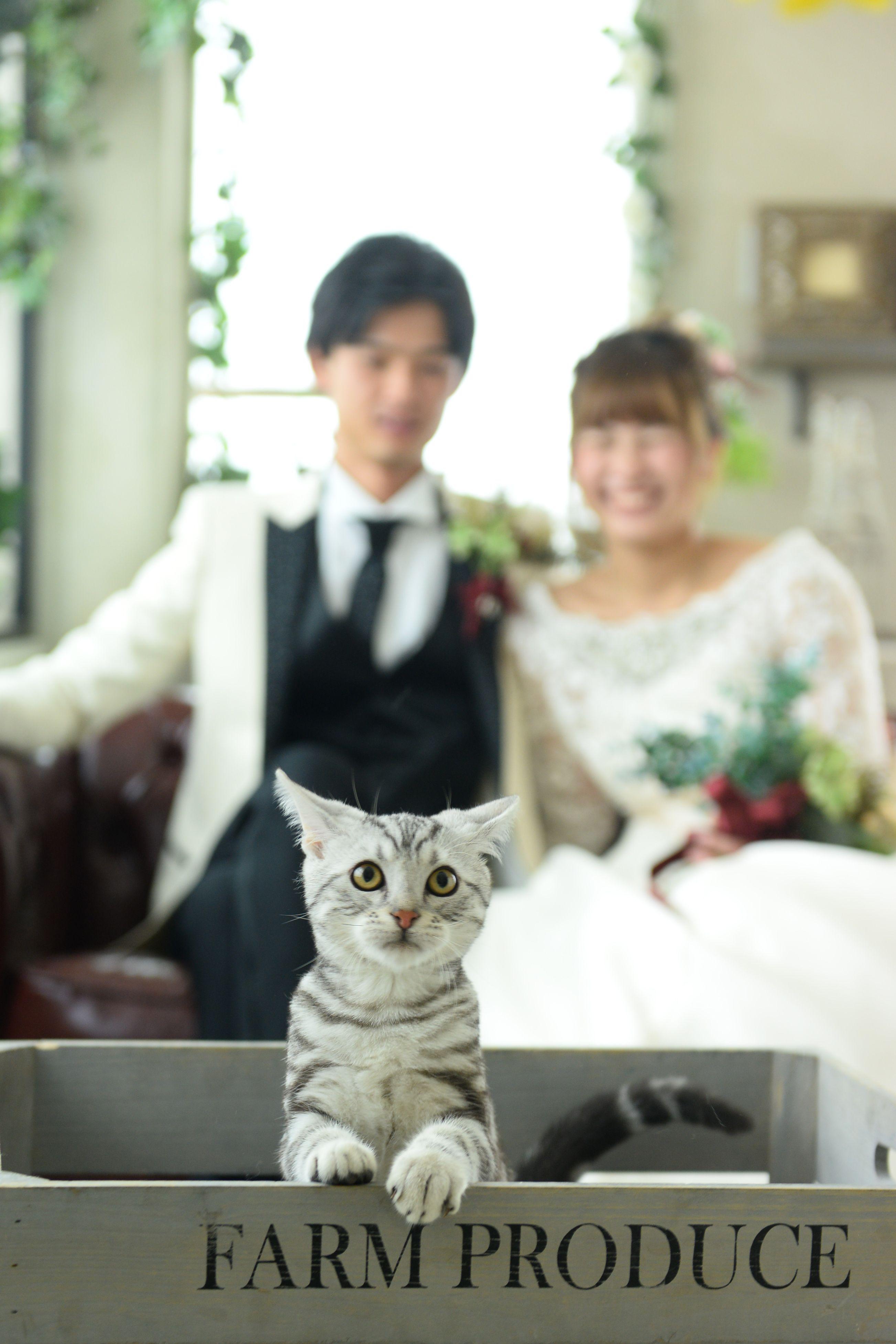 猫ちゃんと一緒にフォトウェディング ウェディングフォト 結婚式 ペット ウェディング