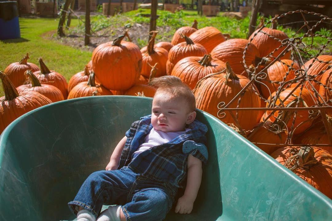 Happy Sunday! . . . pumpkinpatch pumpkincarving pumpkinspice babypumpkin fallfashion ...