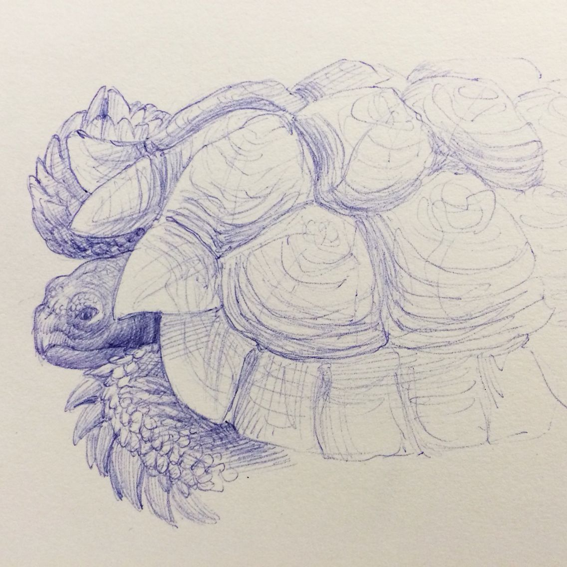 Live Tortoise In Class Ballpoint