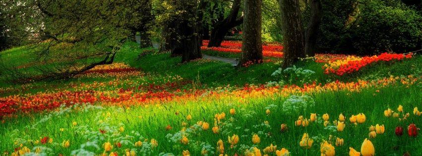Flower Wallpaper For Facebook Cover