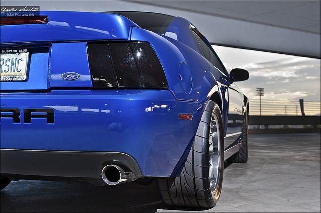 Terminator On Mustang