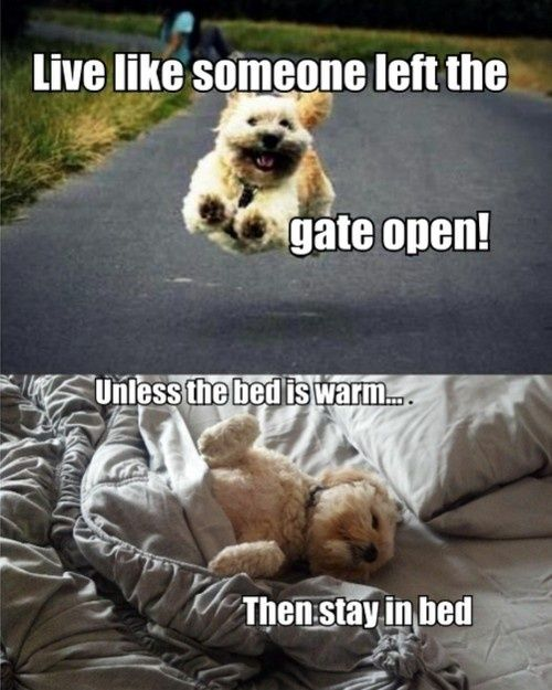 Live Like Someone Left The Gate Open Quote: Funny Dog Quotes ...For More Humor Dogs.