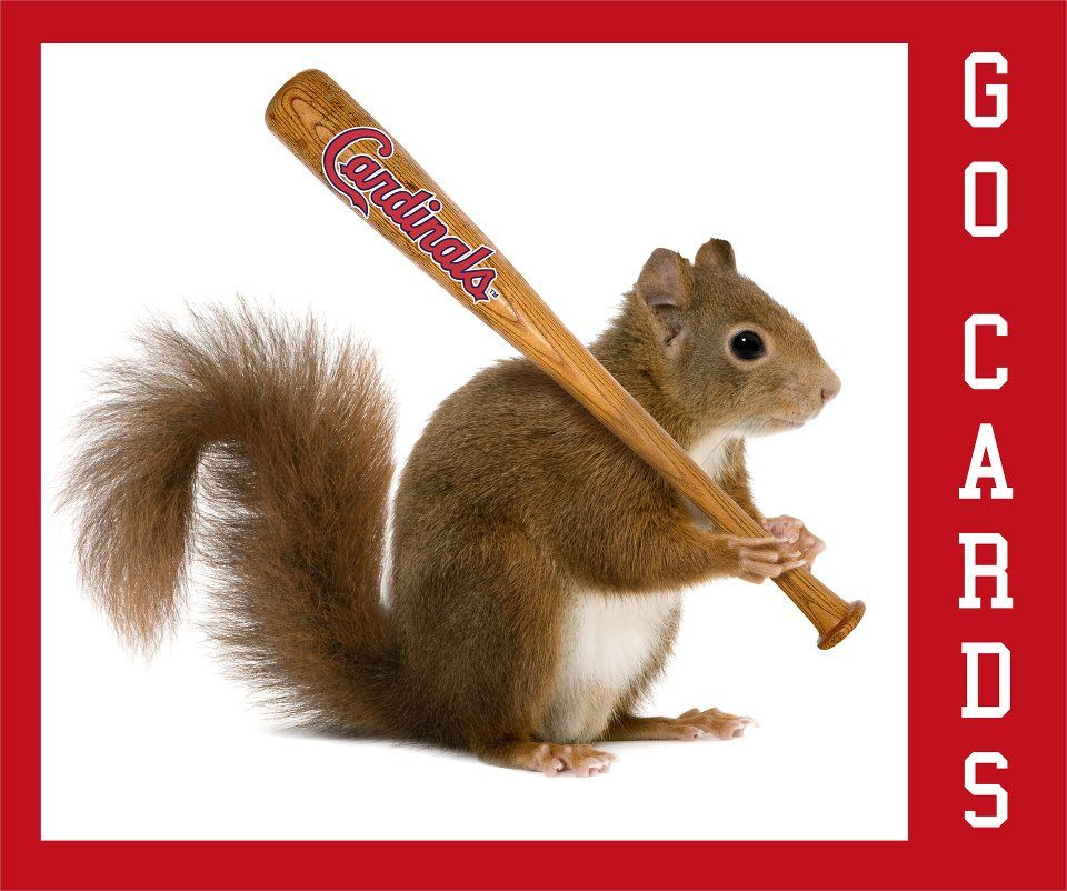 St Louis Cardinals Rally Squirrel!
