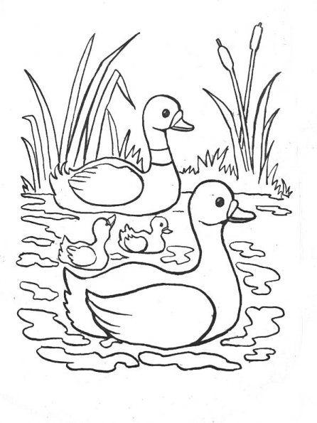 Canard cane canetons 4 malov n zv tek pinterest canards coloriage et coloriage enfant - Canard dessin facile ...