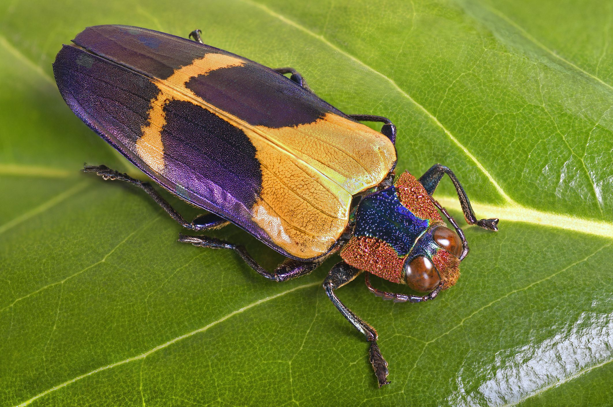 10 Fascinating Facts About Insects Insects Beetle Insect Fun Facts