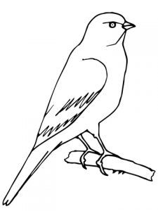 Canary Coloring Pages For Kids Preschool And Kindergarten