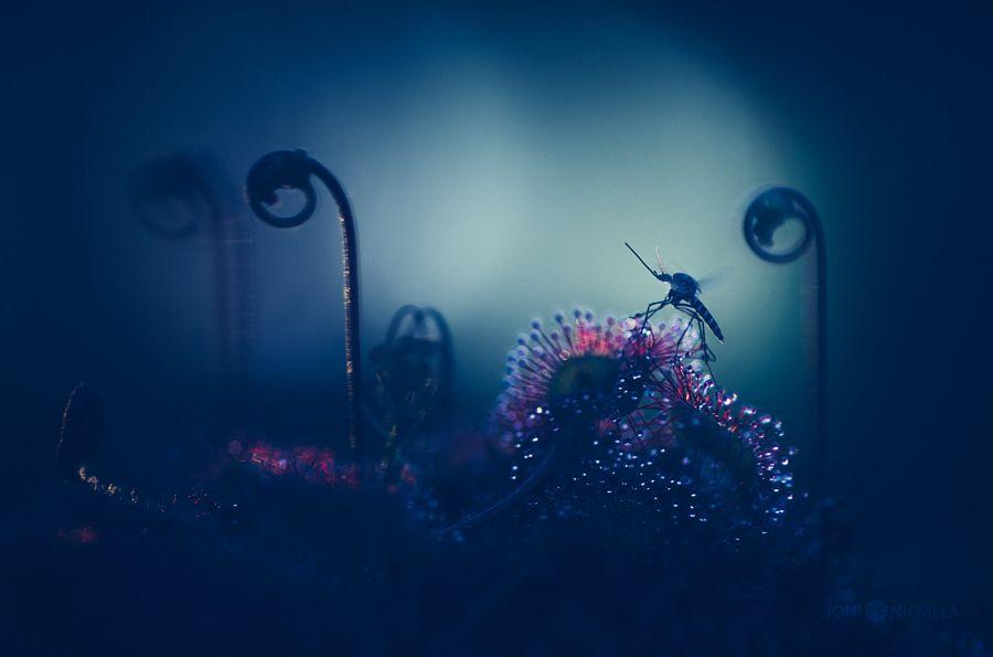 Картинки по запросу macro photography sundew plant