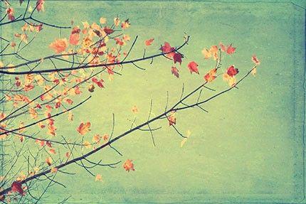 Autumn Tree Art Print, Autumn Leaves Print, Modern Farmhouse Art, Rustic Decor, Vibrant Sky Print #autumnfoliage