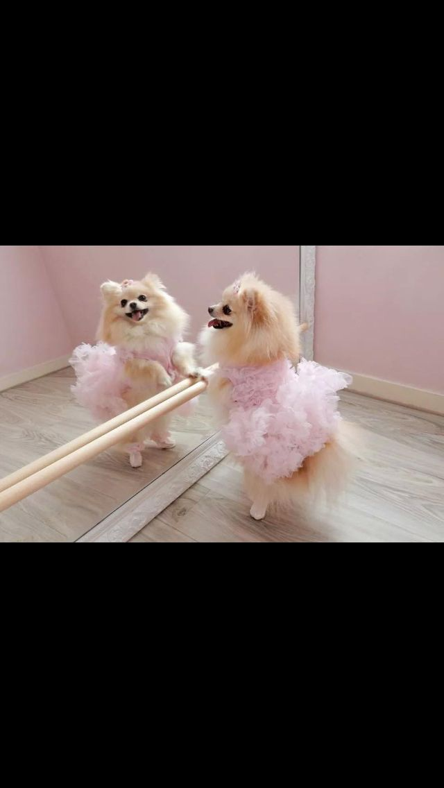 Poms are my favorite!