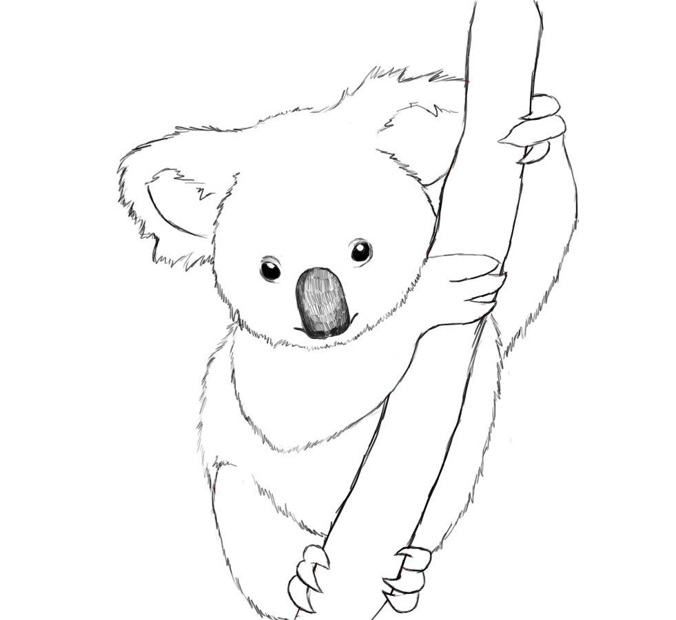 How To Draw A Koala Easy Step By Step Draw Central Koala Drawing Koala Illustration Bear Drawing