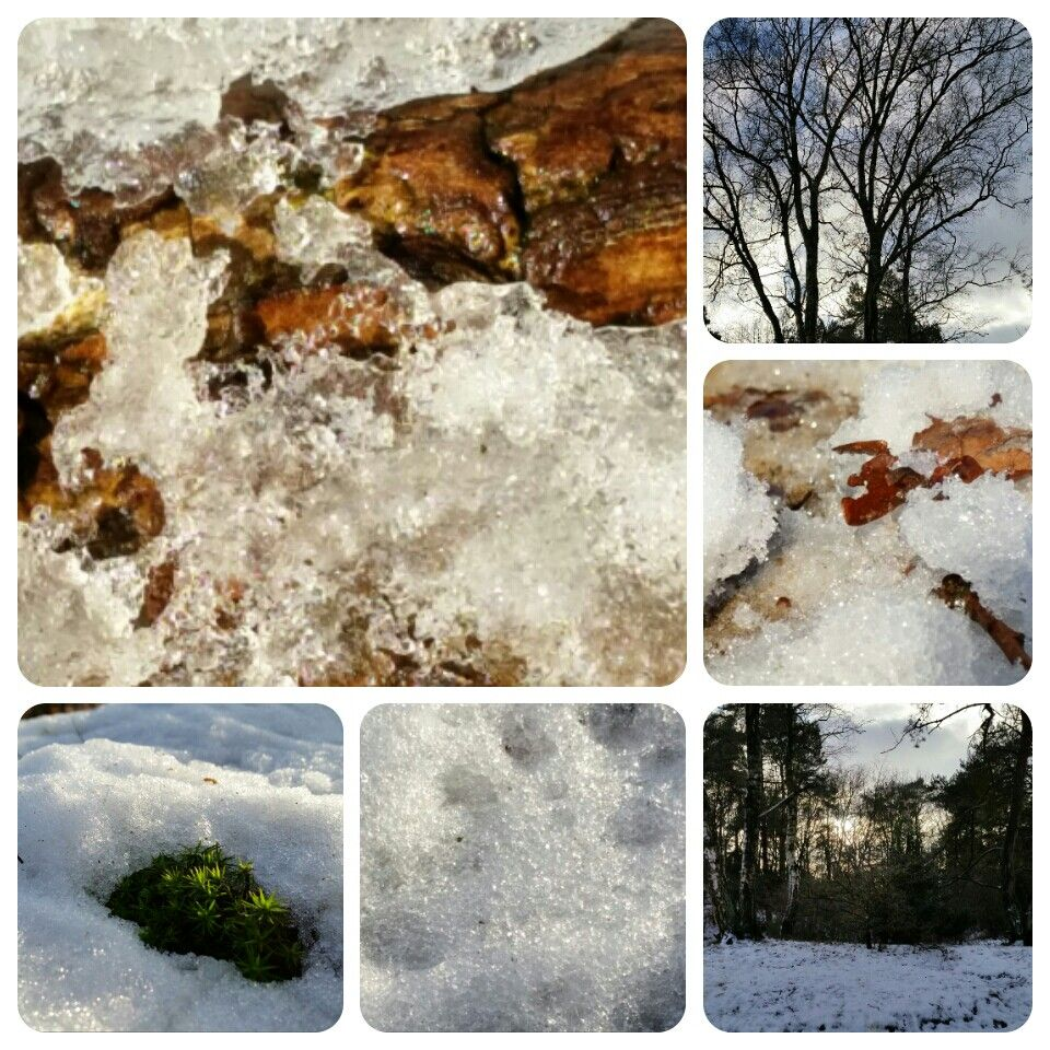 Winter, bomen, sneeuw