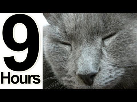 2 Hours Of Cat Music Relaxing Music For Cats 2 Hora Gato