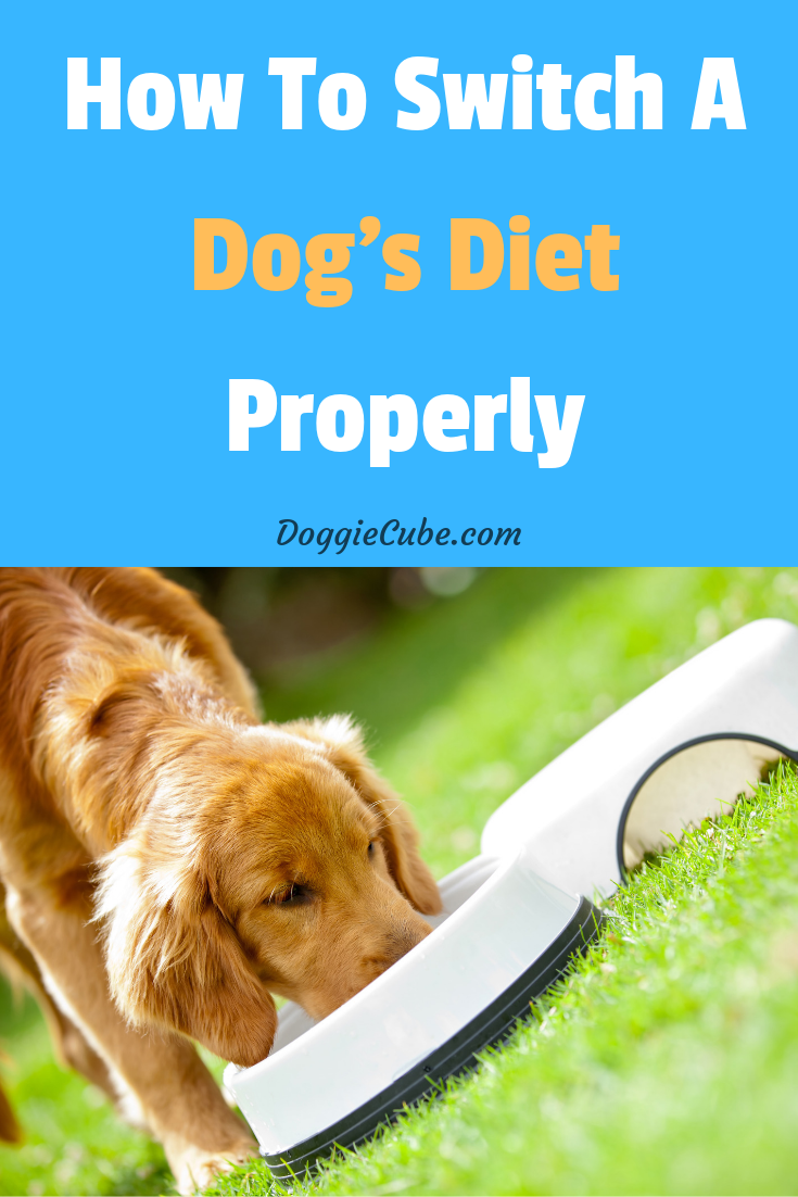 How To Switch A Dog S Diet Properly Doggie Cube Dog Diet Senior Dog Food Recipes Dog Nutrition