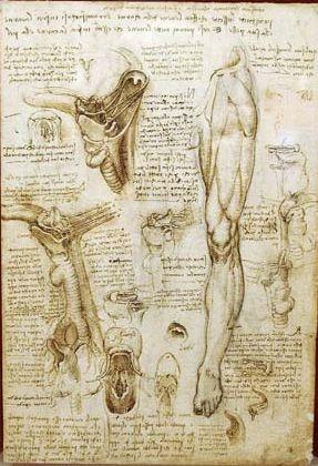 Leonardo Da Vinci Leonardo Da Vinci Pinterest Anatomy