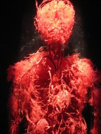How many capillaries are in the human body?