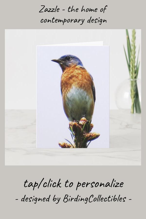 Eastern Bluebird Greeting Card in 2020