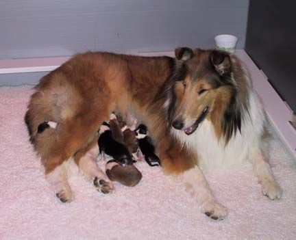 Newborn Puppies Care Of The Newborn Puppy She Does A Great Job