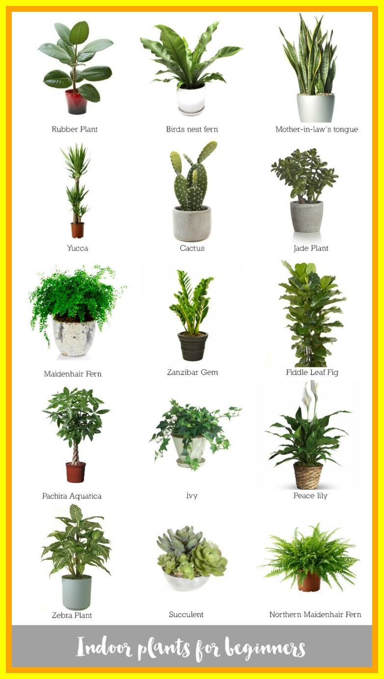 65 Reference Of Best Desk Plants No Sunlight In 2020 Plants Indoor Apartment Indoor Plants Best Indoor Plants