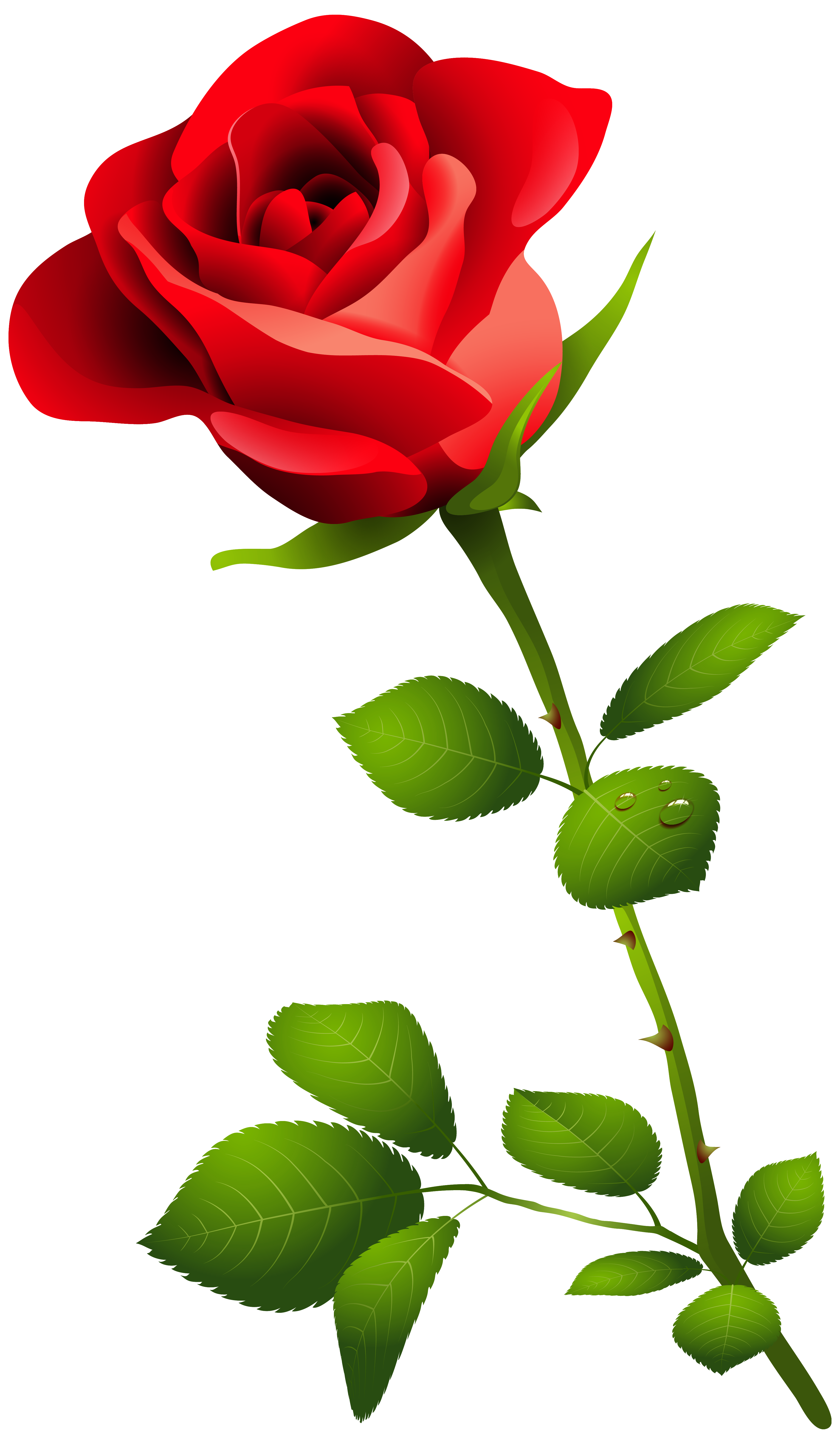 Red Rose With Stem Png Clipart Image Transparent Free
