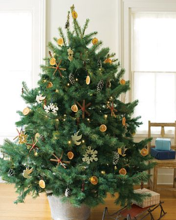 Some farms, such as San Diego's Adopt a Christmas Tree Foundation, take  back trees for planting. purchase a live potted ... - Purchase A Live Potted Tree Instead Of A Cut One, An Option Many