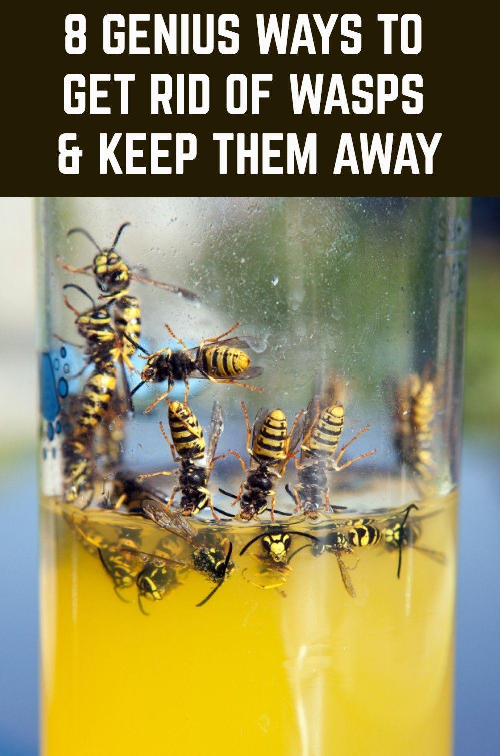 8 Genius Ways To Get Rid Of Wasps & Keep Them Away Get